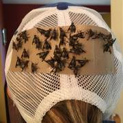 Deerfly Patches