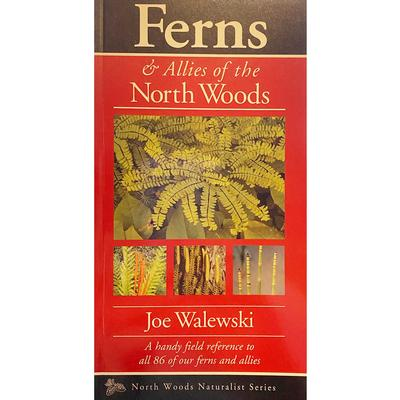 Ferns And Allies Of The North Woods