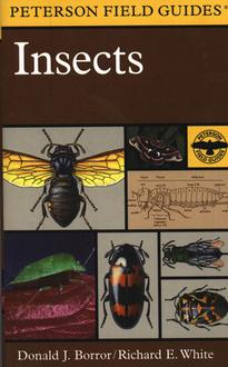 Insects Field Guide