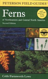 Ferns Of Northeastern And Central North America